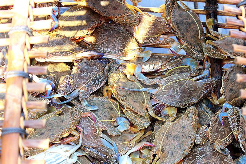 Hải sản biển Kep Campuchia