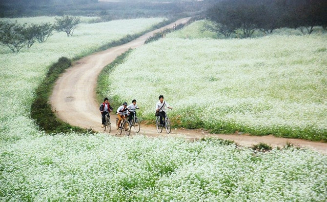Cánh đồng hoa cải Mộc Châu