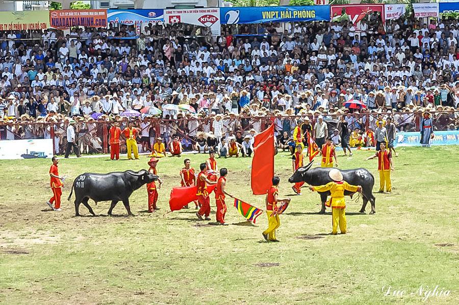 Lễ hội chọi trâu