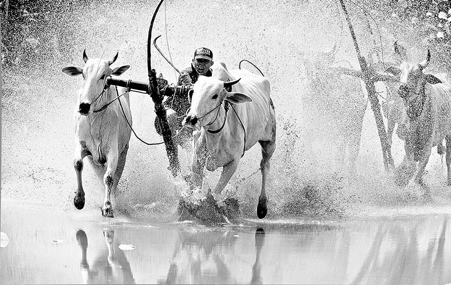 Lễ hội đua bò Bảy Núi