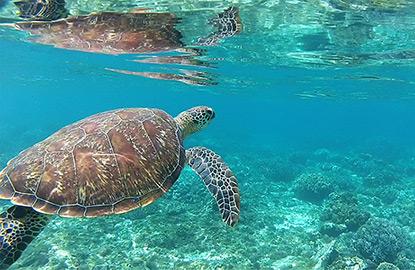 Kinh nghiệm du lịch phượt Đảo Apo