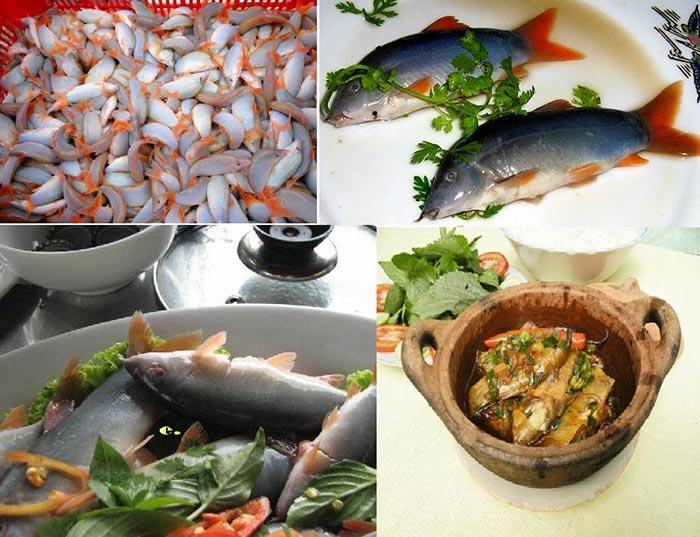 Cá heo sông Hậu An Giang