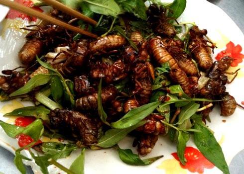Ve sầu chiên Mai Châu