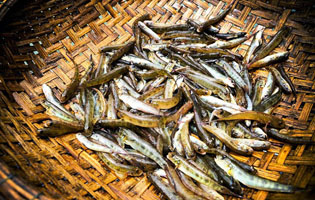 Cá bống vùi gio Lai Châu