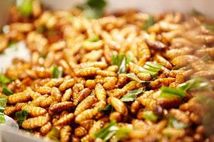 Các món từ ong vò vẽ Cao Bằng