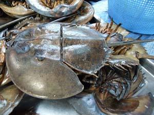 Sam biển Tân Thành Gò Công