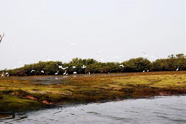 Cồn Lu Nam Định