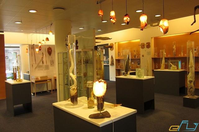 Nhà Bảo tàng biển Cù lao Chàm