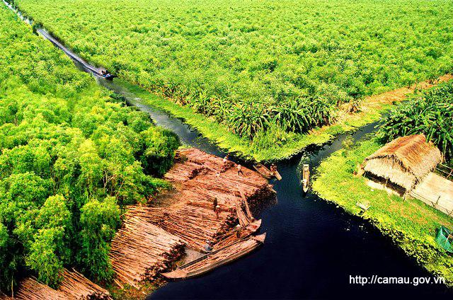 Rừng U Minh Hạ Cà Mau
