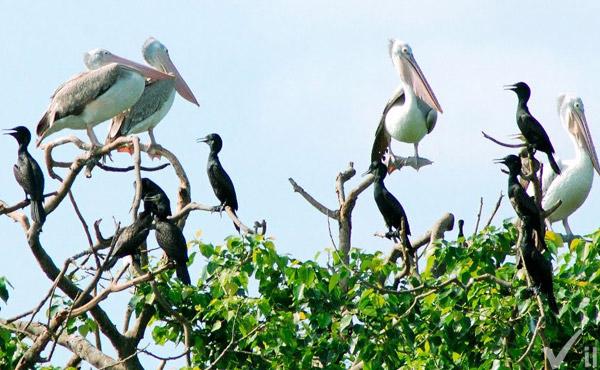 Sân chim Vàm Hồ Bến Tre