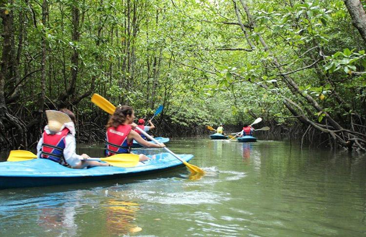 Tour Mangrove (khám phá rừng đước Langkawi)