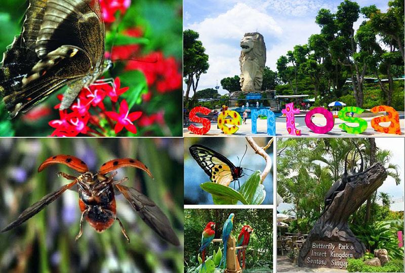 Vươn quốc côn trùng Singapore
