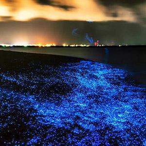 Biển phát sáng