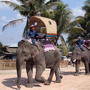 Cưỡi voi Luang Prabang