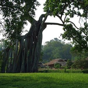 Khu di tích lịch sử Tân Trào