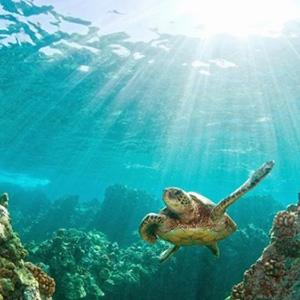 Thăm thú thiên nhiên Côn Đảo