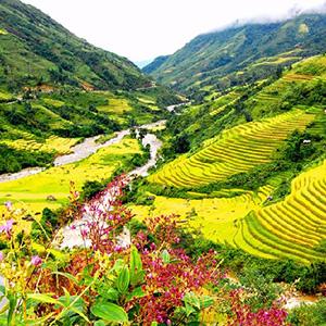 Thung lũng Mường Hoa Sa Pa