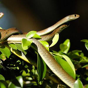 Trại rắn Đồng Tâm Tiền Giang