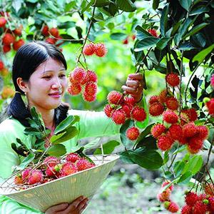 Vườn cây ăn trái Cái Mơn Bến Tre