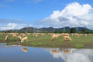 Đồng cừu An Hòa