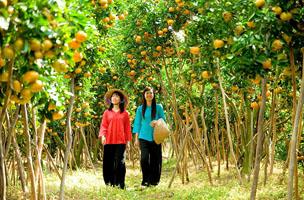 Những vườn trái cây Vĩnh Long