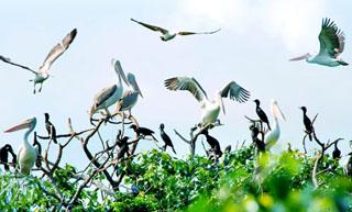 Vườn chim Ngọc Hiển Cà Mau