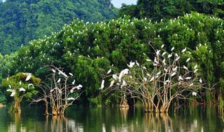 Vườn chim - Thung Nham
