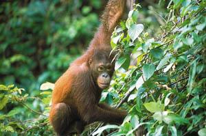 Vườn thú Lok Kawi